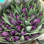 Тюльпаны мелким оптом премиум качество, Иркутск