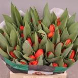 Голландские тюльпаны оптом Каданс (Cadans), Иркутск