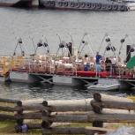 Комплект понтонов для плавучего ресторана 300 кв. м, Иркутск