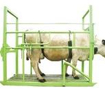 Фиксационный станок для животных, Иркутск
