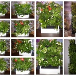 Красивый бизнес gardenwall, доступен каждому (ищем представителей), Иркутск
