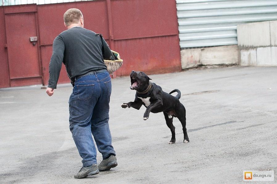 Дрессировка собак в первомайском районе новосибирск